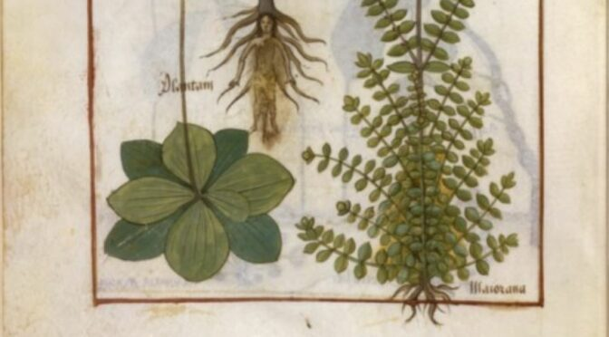 Journée d'étude – 17 mars 2022 : La Faune et la Flore